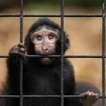 Sad little monkey — Stock Photo #25747207