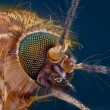 Stock Photo: Extreme sharp and detailed study of mosquito head
