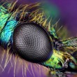 Royalty-Free Stock Photo: Eye of insect