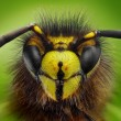 Extreme sharp and detailed study of wasp head — Stock Photo