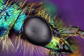 Eye of insect — Stock Photo