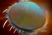 Macro fly eye — Stock Photo