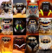 Set of jumping spiders — Stock Photo