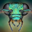 Extreme sharp and detailed view of green metallic bug head taken with microscope objective stacked from many shots into one very sharp photo — Stock Photo
