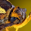Extreme sharp and detailed view of colorful moth head taken with microscope objective stacked from many shots into one very sharp photo — Stock Photo