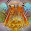 Extreme sharp macro portrait of small fly head taken with 25x microscope objective stacked from many shots into one very sharp photo — Stock Photo #27390719