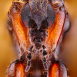 Extreme sharp and detailed photo of 3milimetres small fly taken with microscope objective stacked from many shots into one very sharp photo. — Stock Photo