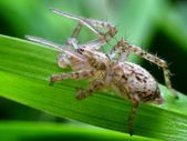 Closeup of spider in its natural environment — Stock Photo