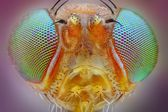 Extreme sharp macro portrait of small fly head taken with 25x microscope objective stacked from many shots into one very sharp photo — Stock Photo