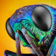 Cuckoo wasp — Stock Photo