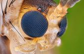 Study of small insect head — Stock Photo