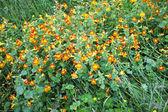 Field of Wildflowers — Stock Photo