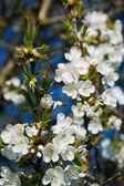 Flor de primavera — Fotografia Stock