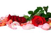 розы — Stock Photo