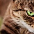 Stock Photo: Cat with green eyes on