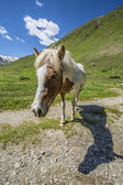 Small large horse — Stock Photo