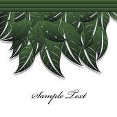 Green leaves — Stock Vector