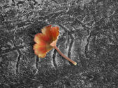 Delicate red leaf on asphalt with wheel track — Stock Photo