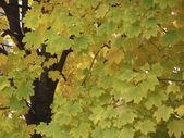 Textura de hojas — Foto de Stock