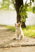 A small cat — Stock Photo