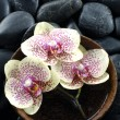 Stock Photo: Spstill with orchid