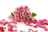 Petals and pink rose — Stock Photo