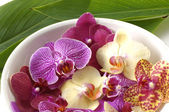 Bowl of colorful orchid — Stock Photo