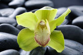 Pebbles with yellow orchid — Stock Photo