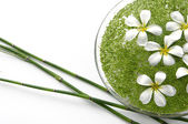 Frangipanis and green duckweed — Stock Photo