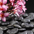 Frangipani and black pebbles  — Stock Photo