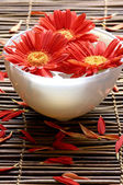 Red flower in bowl — Stock Photo