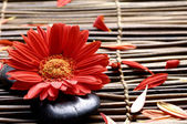 Red flower in the spa — Stock Photo