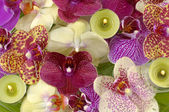 Colorful orchid — Stock Photo