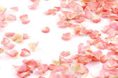 Colorful rose petals — Stock Photo