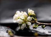 Spa merkezi yine kiraz çiçek — Stok fotoğraf