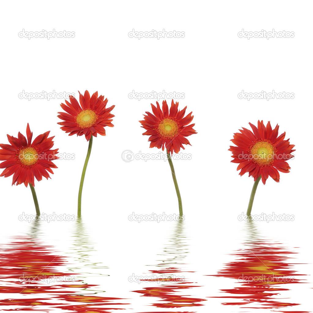 Fleur rouge longue tige photographie crystalstock 22250155 - Fleur blanche longue tige ...