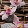 Orchids and stone - Stock Photo