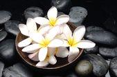 Bowl of frangipani — Stock Photo