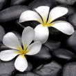 Spa stones and flower — Stock Photo