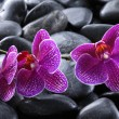 Spa beauty orchid - Stock Photo