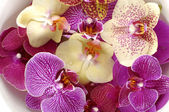 Colorful orchid — ストック写真