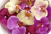 Coloridas orquídeas — Foto de Stock