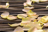 Withered rose petals — Stock Photo
