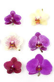 Orchid collection — Stock Photo