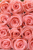 Multiple pink roses — Stock Photo
