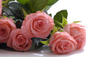 Rose su bianco — Foto Stock