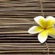 Frangipani flower — Stock Photo #24854717
