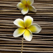 Frangipani flower — Stock Photo #24854735