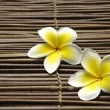 Frangipani flower — Stock Photo #24854737
