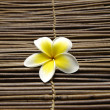 Frangipani flower — Stock Photo #24854739